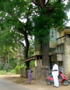 taj-tree2