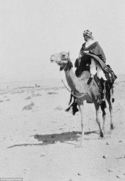 taj-camel-fb1